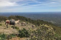 Esel auf dem Berg Picota